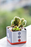 Succulent and cactus Stock Image
