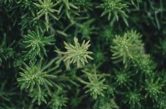 Succulent Close up. Close up of a succulent Stock Image