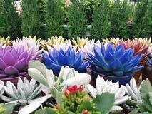 Succulent color background garden windowsill. Succulent color background windowsill garden Stock Image