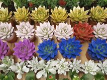 Succulent color background garden windowsill container. Succulent color background windowsill garden container Stock Image