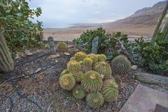 Succulent Corner Stock Images
