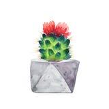 Succulent d'aquarelle dans un pot de fleurs blanc d'isolement par balai Image stock