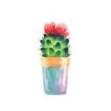 Succulent d'aquarelle dans un pot de fleurs blanc d'isolement par balai Images libres de droits