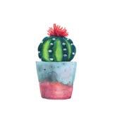 Succulent d'aquarelle dans un pot de fleurs blanc d'isolement par balai illustration libre de droits