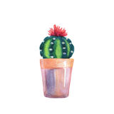 Succulent d'aquarelle dans un pot de fleurs D'isolement Images libres de droits