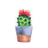Succulent d'aquarelle dans un pot de fleurs D'isolement Photos stock