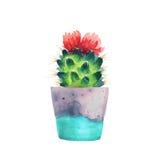Succulent d'aquarelle dans un pot de fleurs D'isolement Images stock