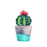 Succulent d'aquarelle dans un pot de fleurs D'isolement Image libre de droits