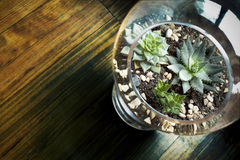 Succulent Terrarium for Decoration Royalty Free Stock Photography