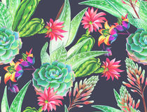 Succulent design, seamless pattern. Seamless pattern with succulents and cactuses. Blossoming succulents design in watercolor illustration. succulents bouquets Royalty Free Stock Photography