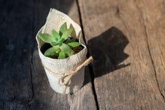 Succulent en un crisol Fotos de archivo