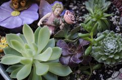 Succulent Fairy Garden. With aeonium, echeveria, and sempervivum plants royalty free stock photos
