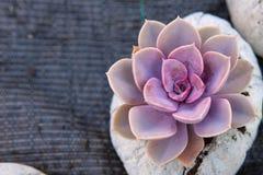 Succulent flower close up in custom cement planter stock photo