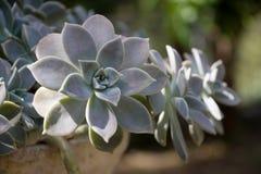 succulent flowerpot стоковое изображение rf