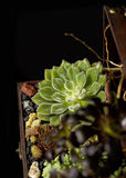 Succulent flowers made by Charismatique Royalty Free Stock Photo