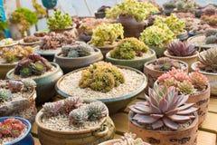 Succulent Garden Stock Image