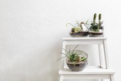 Succulent gardens in glass vases royalty free stock photos