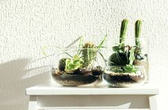 Succulent gardens in glass vases royalty free stock images