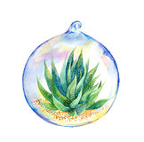 Succulent in glass ball. Watercolor Stock Photos