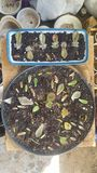 Succulent leaves Setup ready for propagation Success stock images