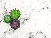 Succulent marble background floral flat lay stock images