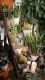 Succulent market. Succulents market plants Royalty Free Stock Photos