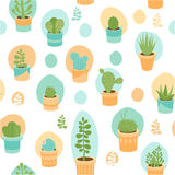 Succulent mix Royalty Free Stock Image