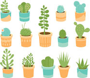 Succulent mix Stock Images