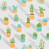 Succulent mix Royalty Free Stock Photo