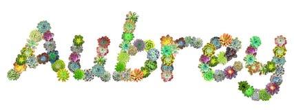 Succulent Name Aubrey Stock Photos