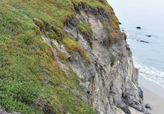 Sea Fig the carpobrotus chilensis and cliff leading down. royalty free stock photography