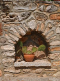 Succulent. In niche in wall in Spain stock photo