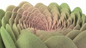 Succulent pelucheux de fleur en spirale Photo libre de droits
