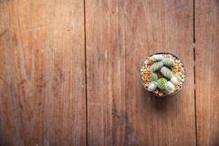 Succulent Pencil and Notebook paper in pot on table wood Still Life Natural background , Cactus Plants on Vintage Wood Background royalty free stock photo