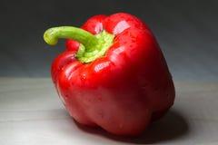 Succulent pepper Stock Image