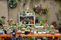Succulent pflanzt Topf Lizenzfreie Stockbilder