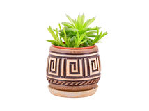 Succulent plant agave Royalty Free Stock Image