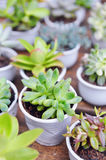 A succulent plant in asia.  stock photo