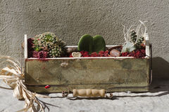 Succulent plant in the box Stock Photos