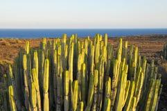 Succulent Plant Cactus on the Dry Desert Stock Photos