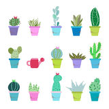 Succulent plant and cactus pots vector illustration background Stock Photography
