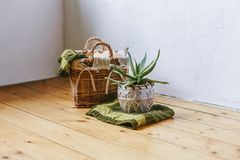 Succulent plant in clay pot on a wooden background. Pumpkin in a woven basket with green plaid. Home decor. Scandinavian style roo stock photos