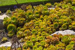 Succulent plant close up stock photography