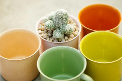 Succulent Plant with colorful pots Royalty Free Stock Images