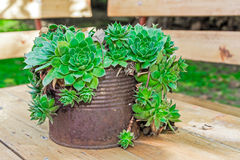 Succulent Plant Container Garden Royalty Free Stock Images