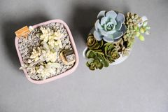 Succulent plant in flowerpot. With copy space royalty free stock images