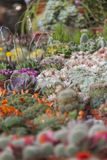 Succulent plant. In the garden Royalty Free Stock Image