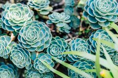 Succulent plant in green background stock photos