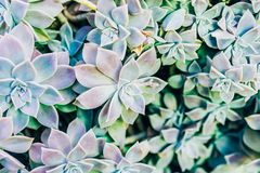 Succulent plant in green background stock images