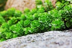 Succulent plant Stock Photos